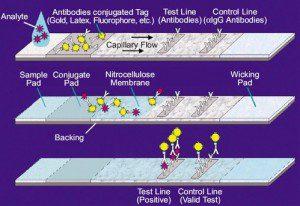 lateral-flow-antigen-assay