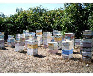 avo_apiary
