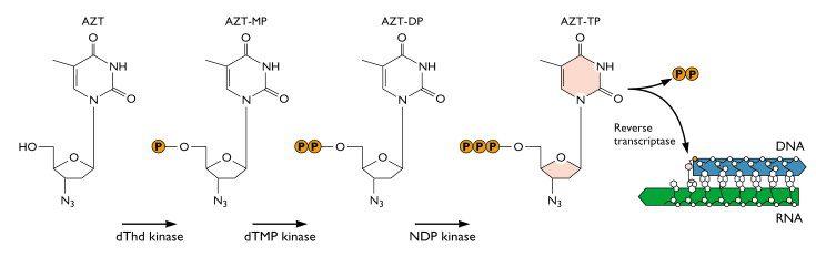 azt_mechanism