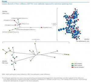 Influenza H7 diversity