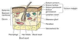 Skin infection - Wikipedia
