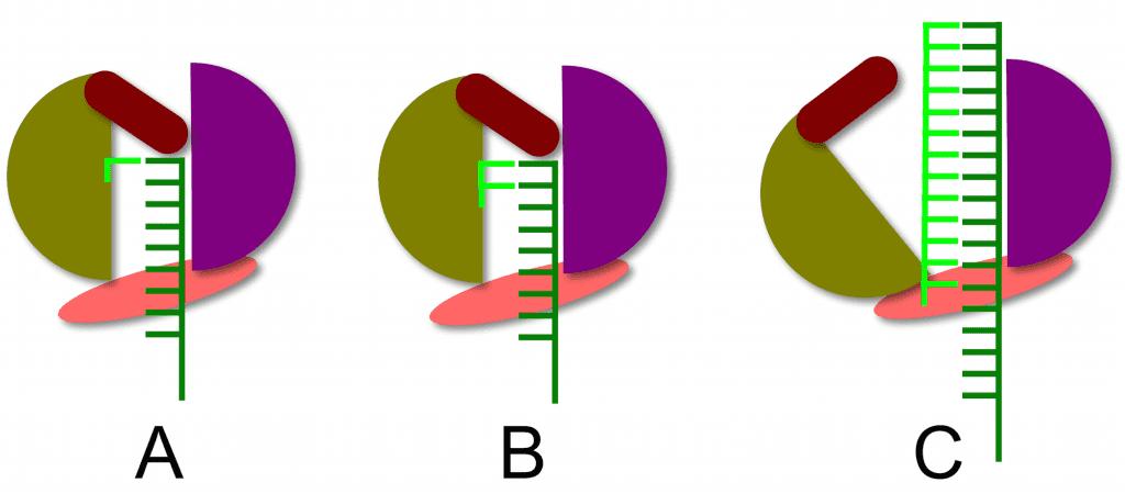 HCV priming of RNA synthesis