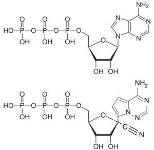ATP EBOV antiviral