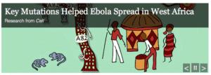 key mutations ebola virus