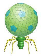 T7-like virus