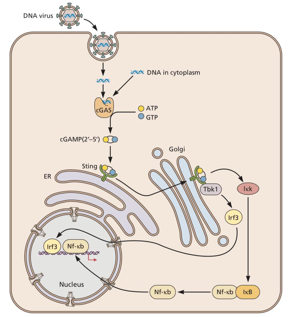 DNA sensing