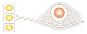 herpesvirus latency