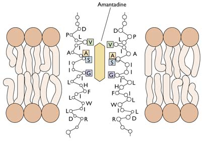 m2-amantadine