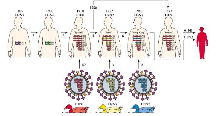 influenza-pandemics
