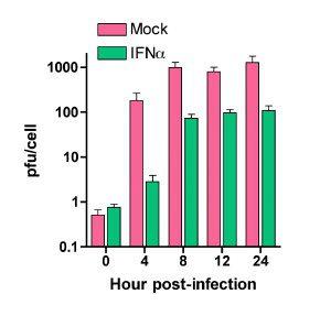 polio-ifn