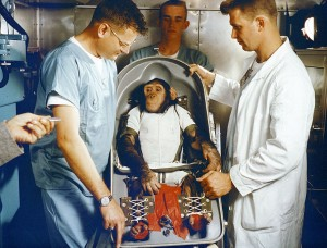 chimpanzee Ham