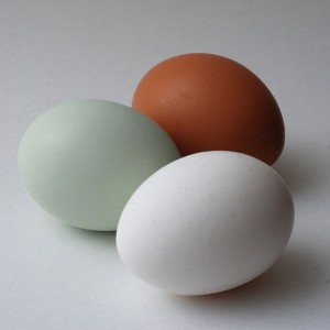 Araucana egg