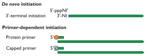 Priming RNA synthesis