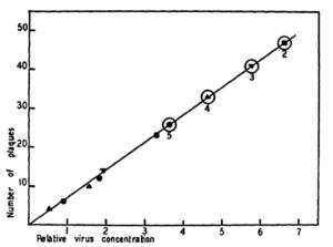 plaque dose response