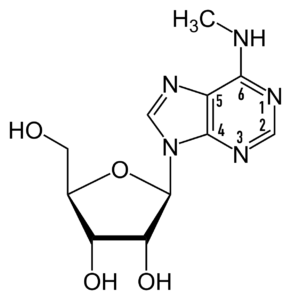 N6-Methyladenosine