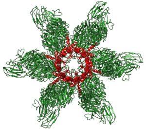 Calicivirus-portal
